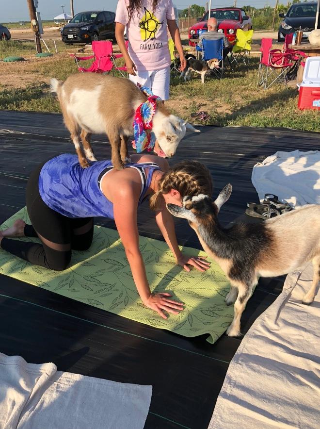 goat yoga2