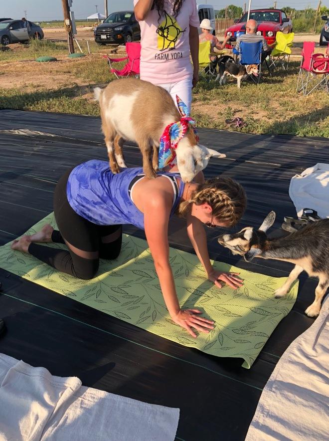 goat yoga3